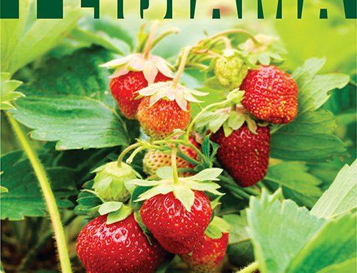 Обложка журнала «Реклама» (май 2014)